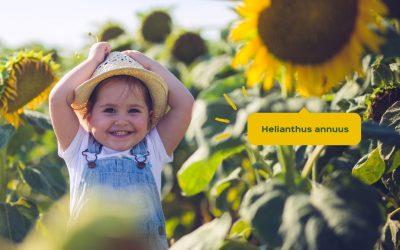 Protection Solaire : Comment protéger votre bébé du soleil ?